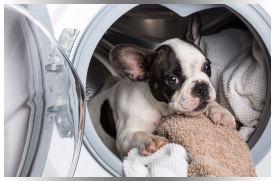 Bulldog puppy snuggling with clean laundry inside dryer