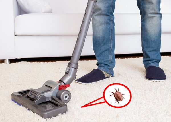 Capturing dust mites on white shag carpet with vaccuum cleaner