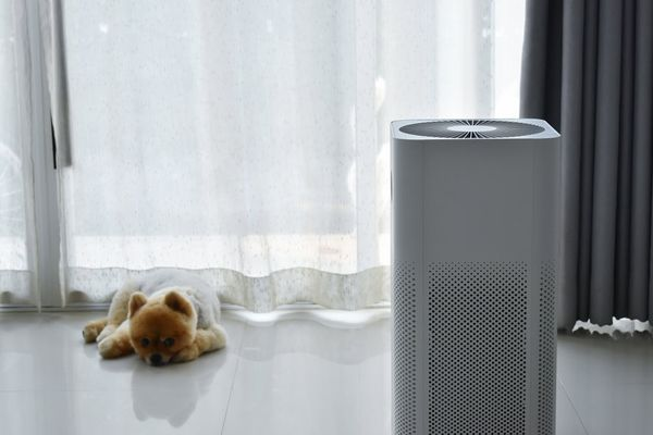 Fluffy puppy lying beside air purifier in Mississauga apartment